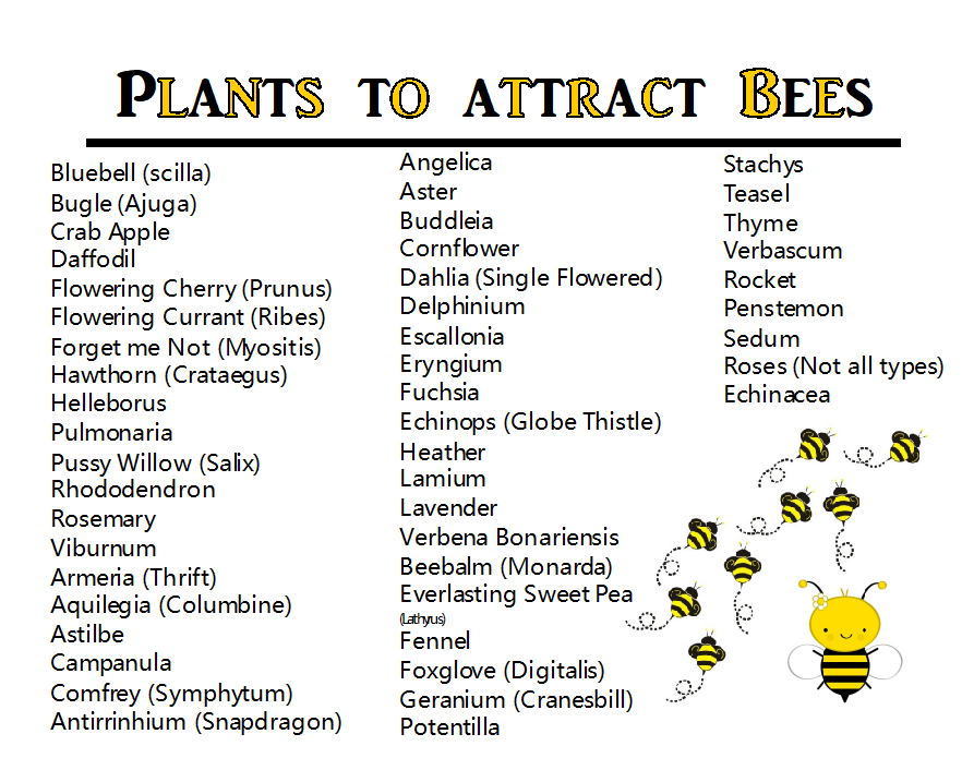 Attracting Bees 1